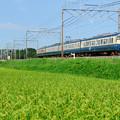 Photos: 113系と緑の田んぼ