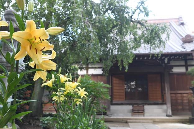 花咲く長円寺