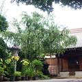 長円寺 境内