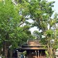Photos: 氷川神社