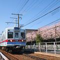 桜と3300形電車