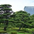 Photos: 二の丸庭園の松とビル
