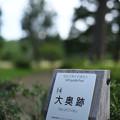 Photos: 大奥