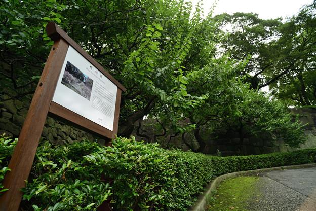 Photos: 梅林坂