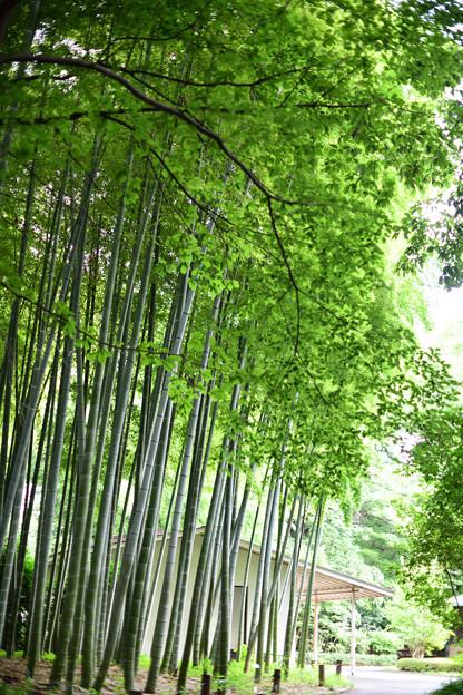 Photos: 竹林