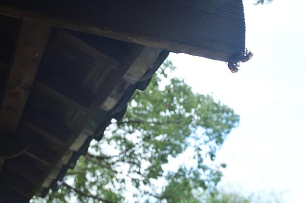 土浦城 霞門 軒と蝉の抜け殻