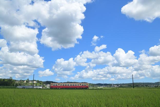Photos: 夏雲と収穫前の田んぼを行く
