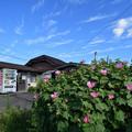 Photos: 夏の名残り