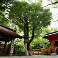 Photos: 水屋と朱塗りの門