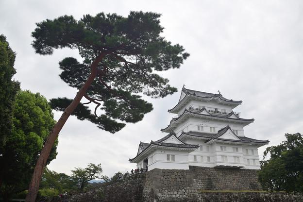 天守閣と松の木