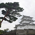 Photos: 天守閣と松の木