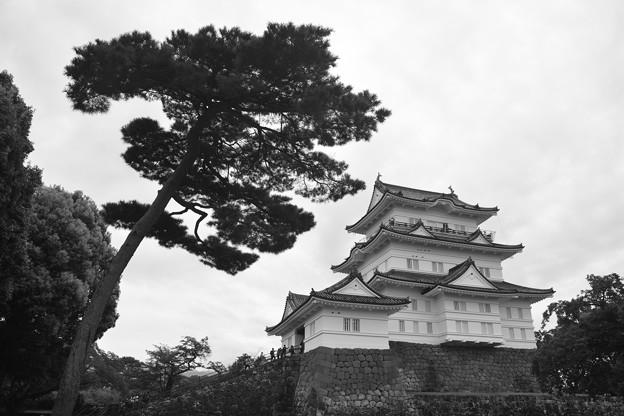 天守閣と松の木 モノクローム