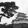 Photos: 天守閣と松の木 モノクローム