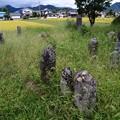 Photos: 草生した墓石