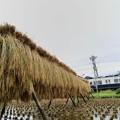 天日干しの稲と丸窓電車