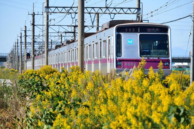 Photos: セイタカアワダチソウと東京メトロ8000系電車