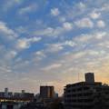 Photos: DSC_9781_00001