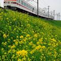 Photos: きりふり号 日光線 栗橋~新古河