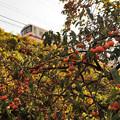 Photos: きりふり号 日光線 板荷~下小代