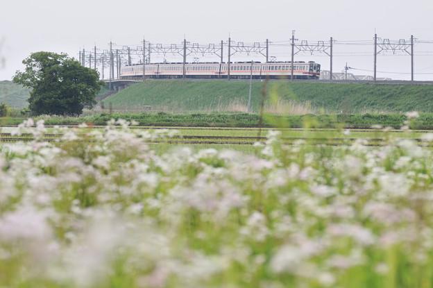 Photos: 6050型 区間快速電車