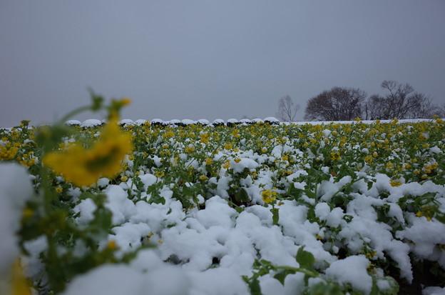 冬と春の競演