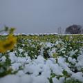 Photos: 冬と春の競演