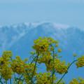 Photos: 春近し。