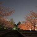 Photos: インクラインの夜桜