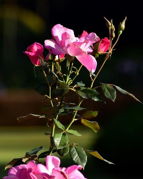 可愛らしい花