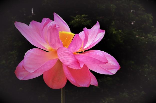 Photos: 花踊る
