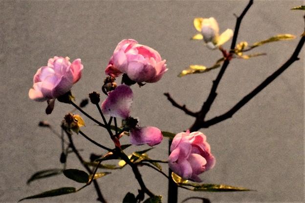 Photos: 春の目覚め