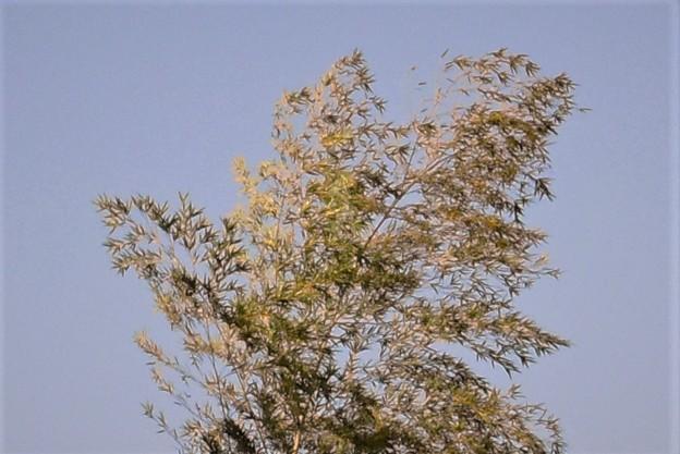 乱気流にもみくちゃにされてる独立竹