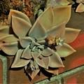 Photos: 花の中の花