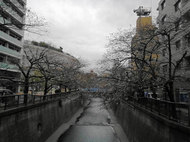 20200323目黒川