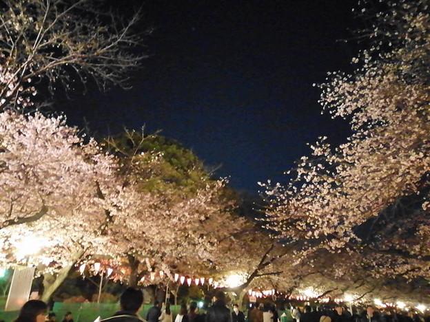 20203025上野公園2