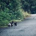 写真: 雨上がりの三匹