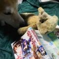 Photos: めだかボックス