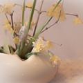 蝋梅と水仙