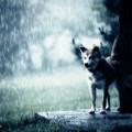 Photos: rain