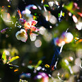 Photos: Bokeh