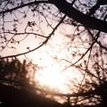 Photos: 春待つ僕ら