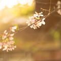 春も終わりですね。