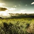 遥かな草原を
