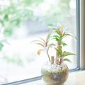 Photos: 窓辺の観葉植物
