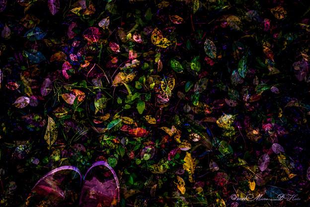 雨上がりの落ち葉たち