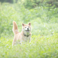 普通にアホ面した犬の写真