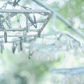Photos: Ref-rain