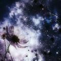 Photos: Cosmos