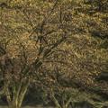 Photos: 秋の始まり