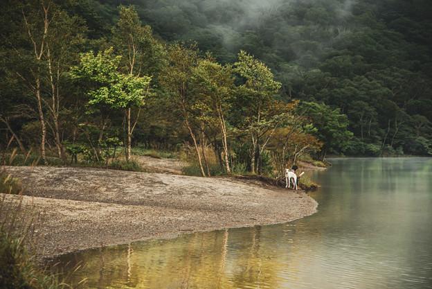 Photos: 湖畔にて~白い犬と読書をする女性~